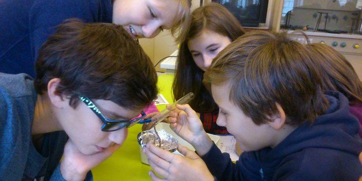 Regenwürmer im Biosaal