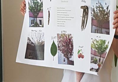 Baumgeschichten der 1C im Schuljahr 2018/2019