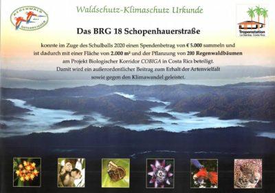 Maturaball: 5000€ für den Regenwald 🌳