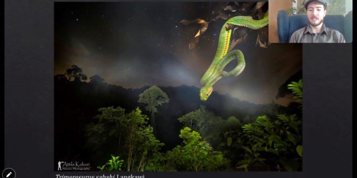 Uni trifft Schule: Geschichten aus dem Regenwald – 5 Jahre herpetologische Naturfotografie – Attila Kobori